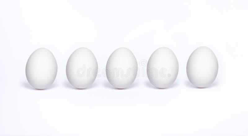 Vector vijf witte realistische dierlijke eieren stock fotografie