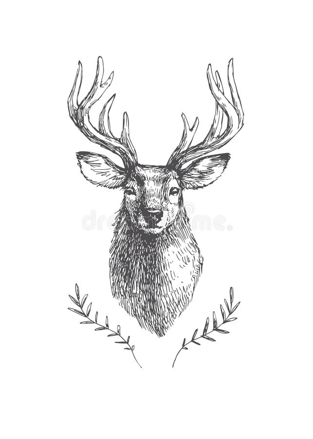 Vector vintage deer head in engraving style. Hand drawn illustration with animal portrait isolated on white.  vector illustration