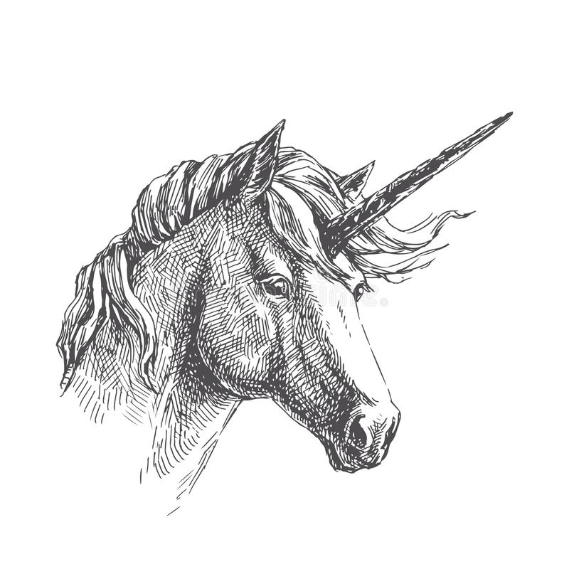 Vector vintage illustration of unicorn in engraving style. Hand royalty free illustration