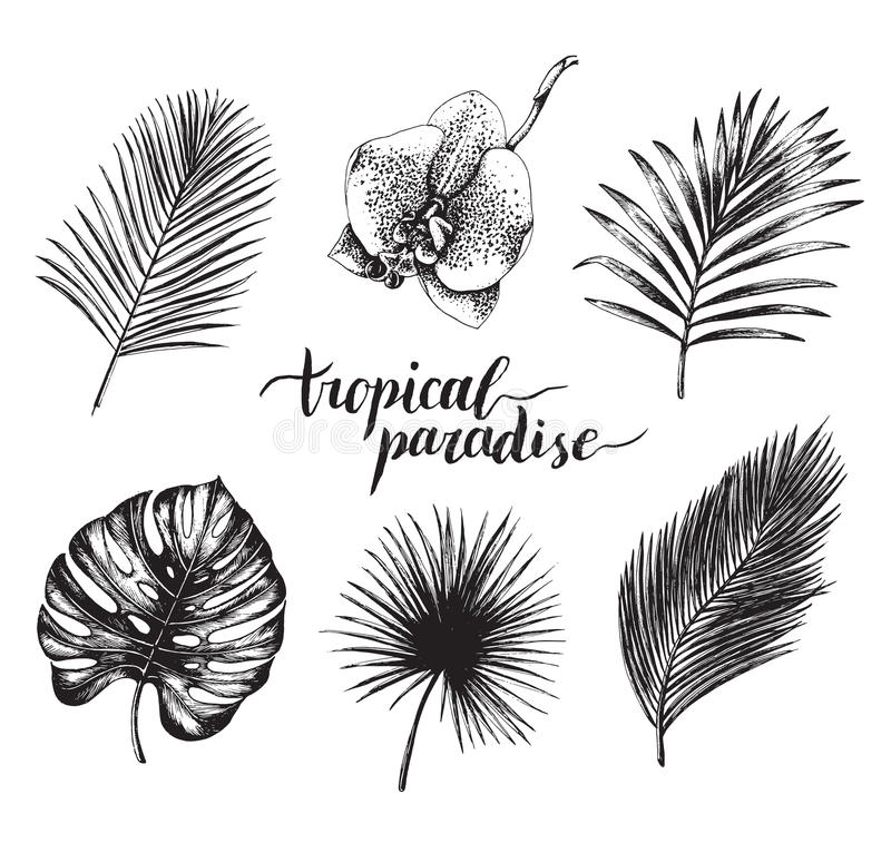 Vector vintage palm leaves illustration. Tropic paradise lettering with hand drawn collection of jungle foliage, flower. vector illustration