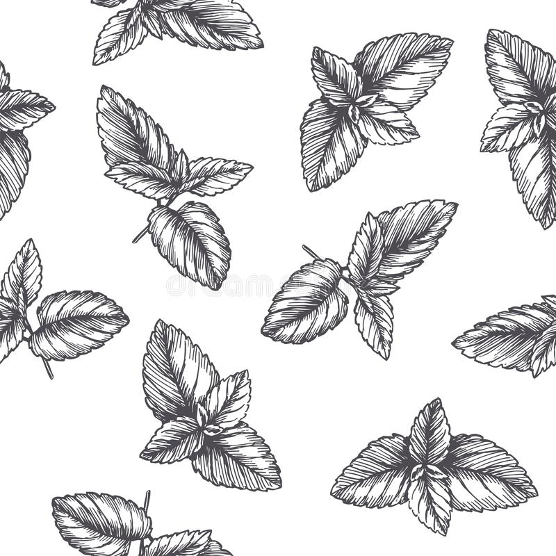 Vector vintage seamless pattern with mint leaves in engraving style. Hand drawn botanical texture with peppermint tips isolated on stock illustration
