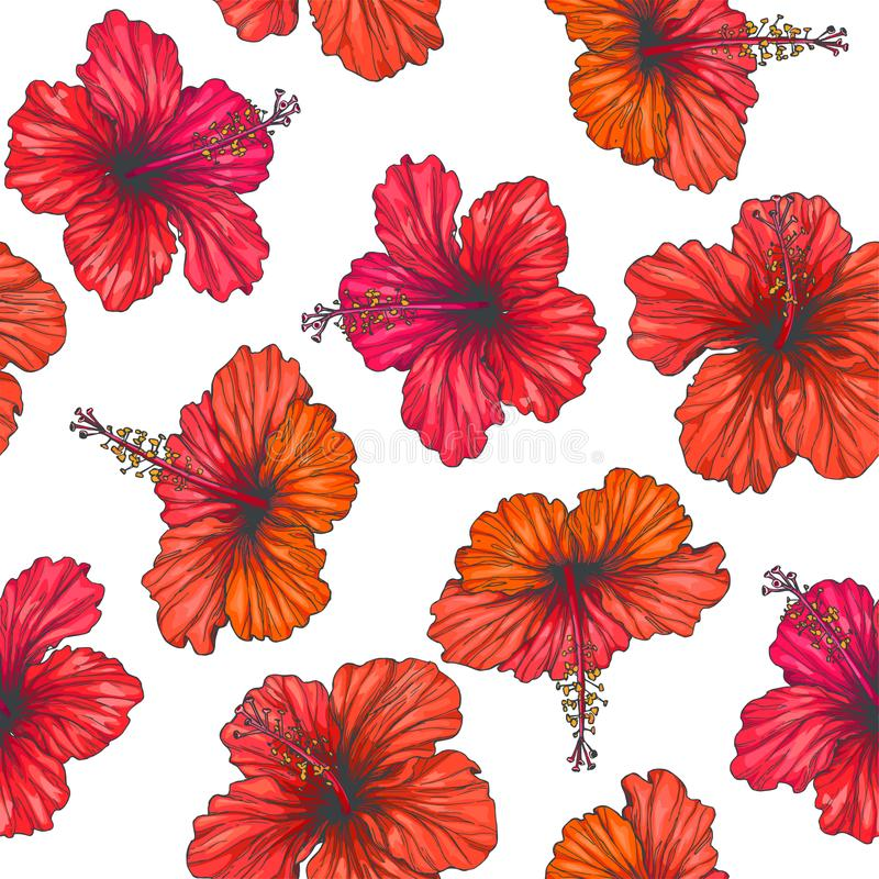 Vector vintage seamless pattern with red tropical flowers isolated on white background. Hibiscus in engraving style. Hand drawn c. Vector vintage seamless vector illustration