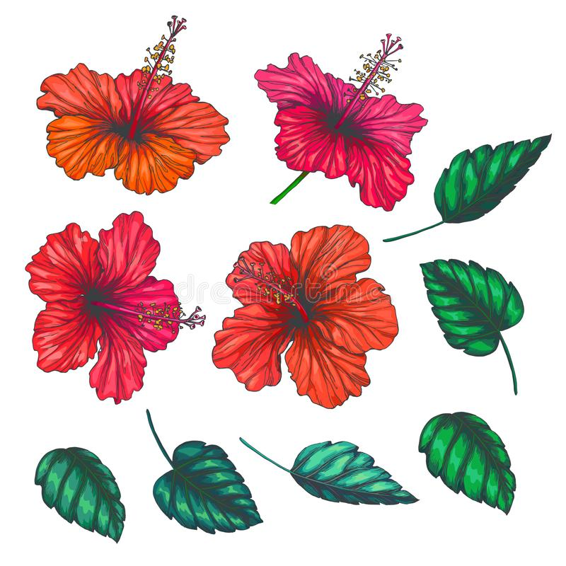 Vector vintage set of red tropical flowers and leaves isolated o royalty free illustration