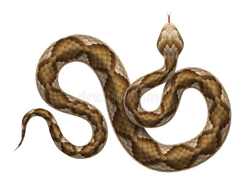 Vector viper snake isolated on white background. stock illustration