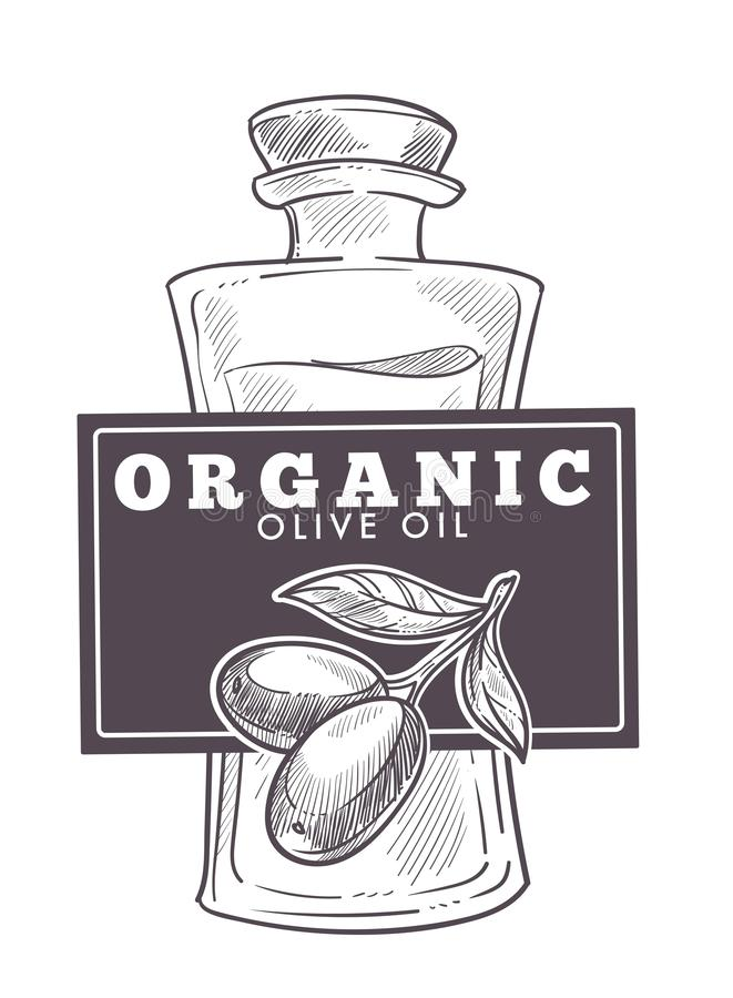 Vector virginal del aceite de oliva, monocromático adicional del cartel del esquema del bosquejo ilustración del vector