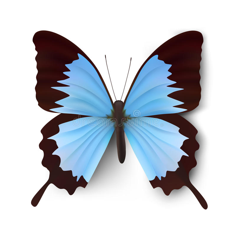 Download Vector vlinderillustratie vector illustratie. Illustratie bestaande uit grafisch - 10777162