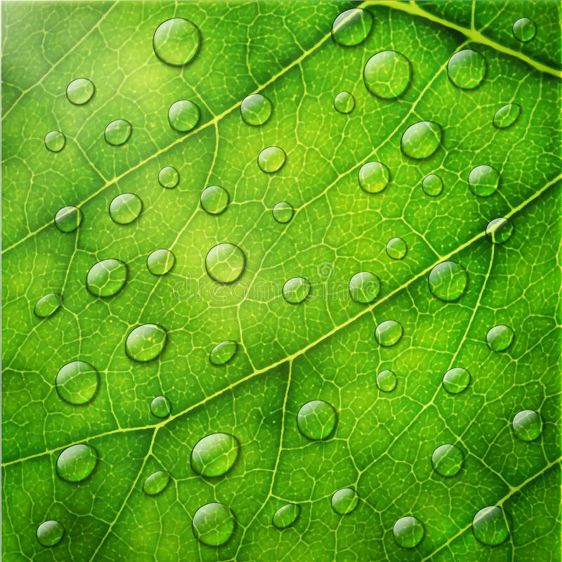 Vector water drops on green leaf macro background. vector illustration
