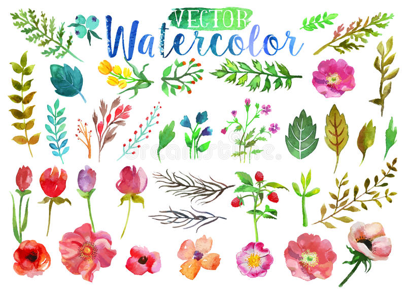 Vector watercolor aquarelle flowers and leaves. vector illustration