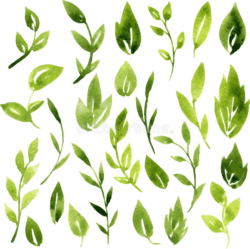 Vector watercolor green leaves and branches stock illustration