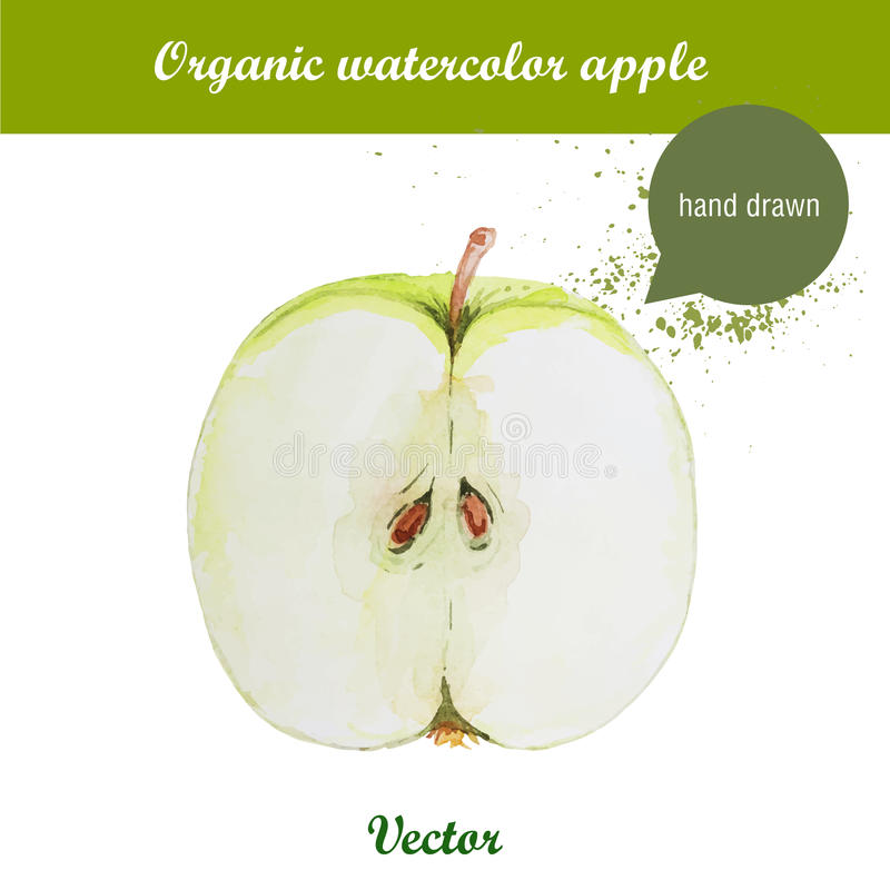Vector watercolor hand drawn green apple with watercolor drops. Organic food illustration stock illustration