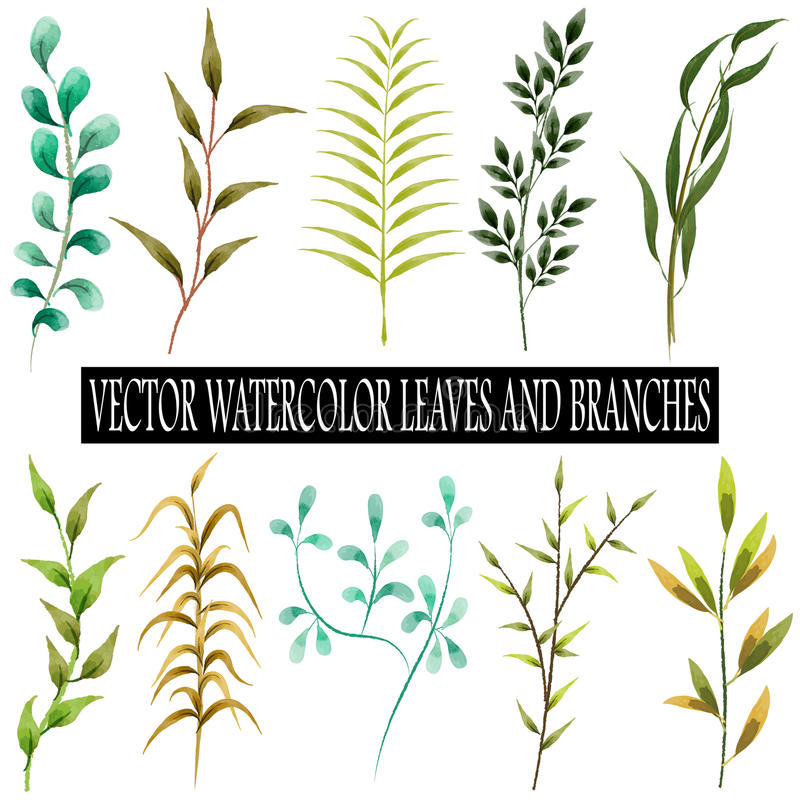 Vector watercolor leaves and branches collection royalty free illustration