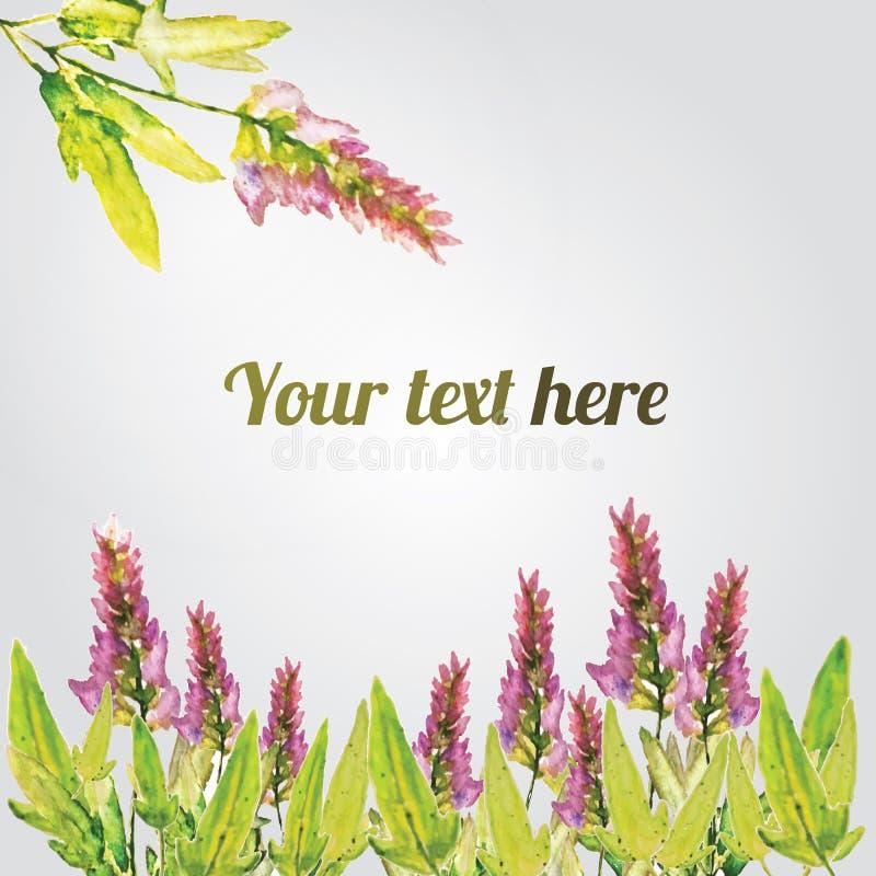 Vector watercolor natural sage plant background. Salvia vector illustration