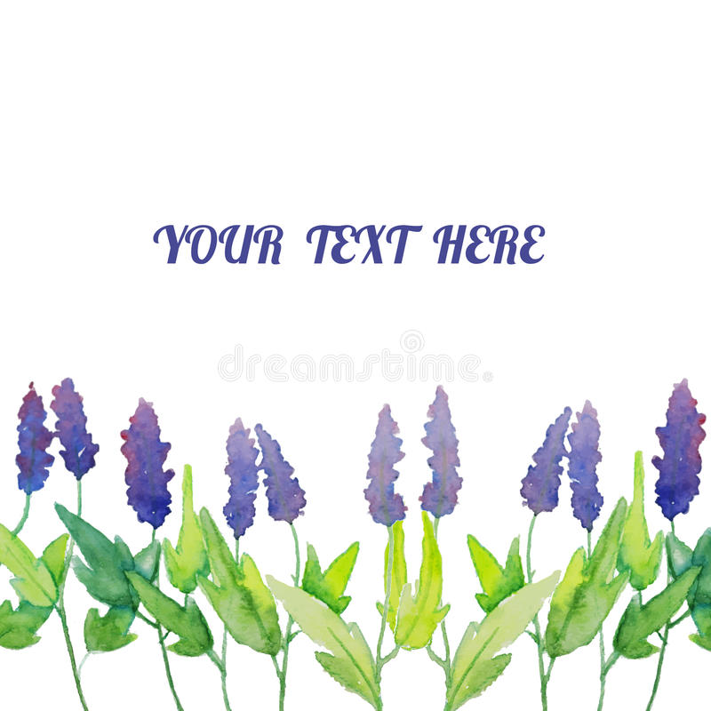 Vector watercolor natural sage plant background. Salvia stock illustration