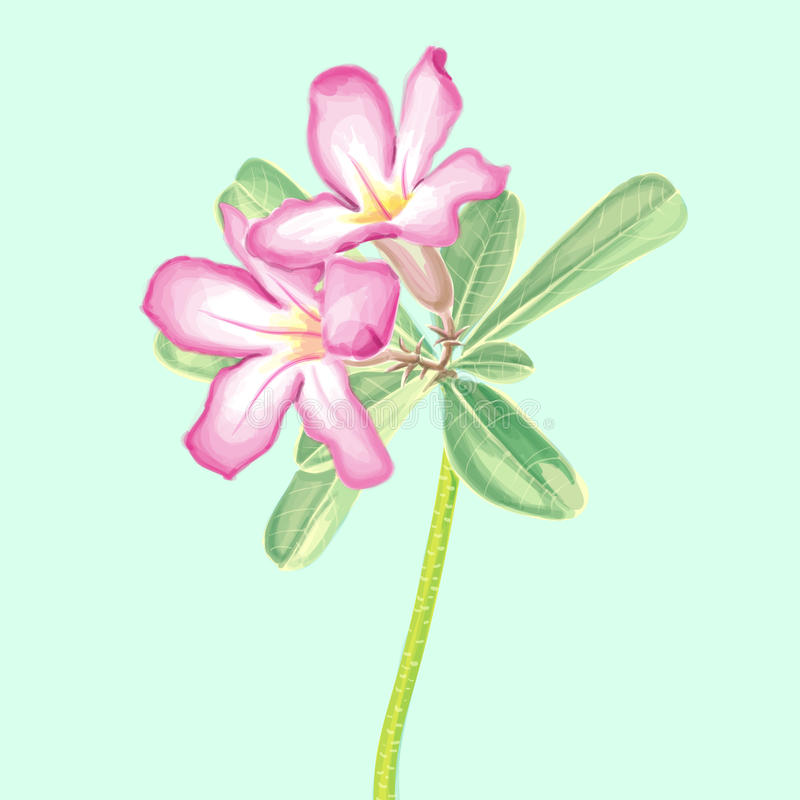 Vector Watercolor Painting of Impala lily stock photo