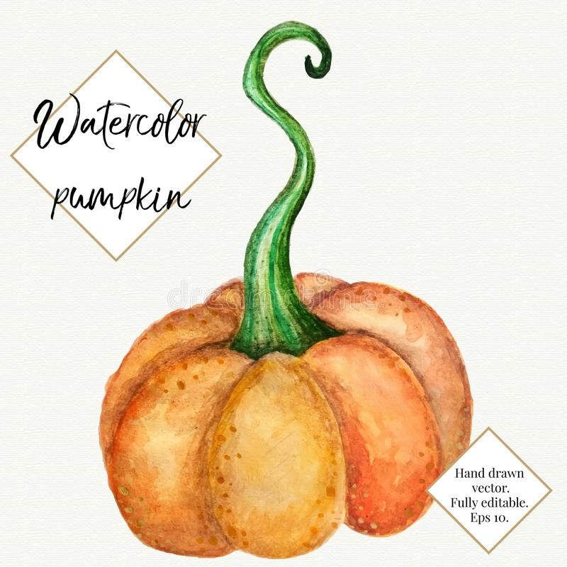 Vector watercolor pumpkin isolated on white background. Hand painted, hand drawn vegetable. Halloween, thanksgiving stock image