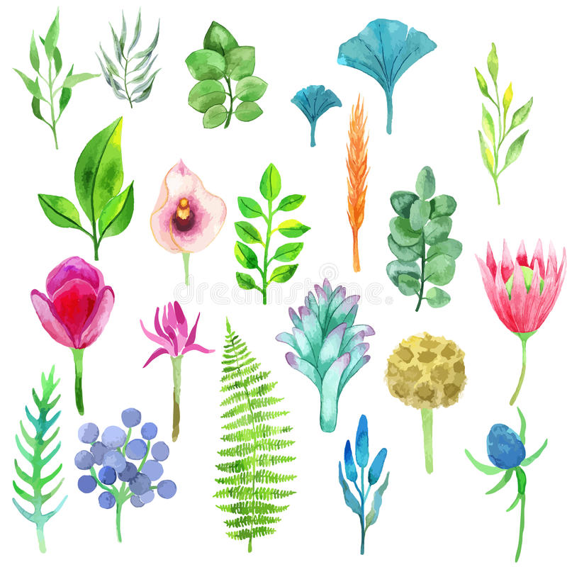 Vector watercolor set of flowers, leaves and plants stock illustration