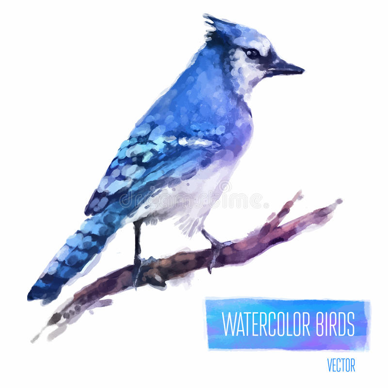 Vector watercolor style illustration of bird stock illustration