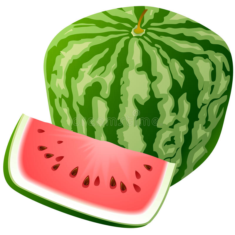 Vector Watermelon. Stock Photos