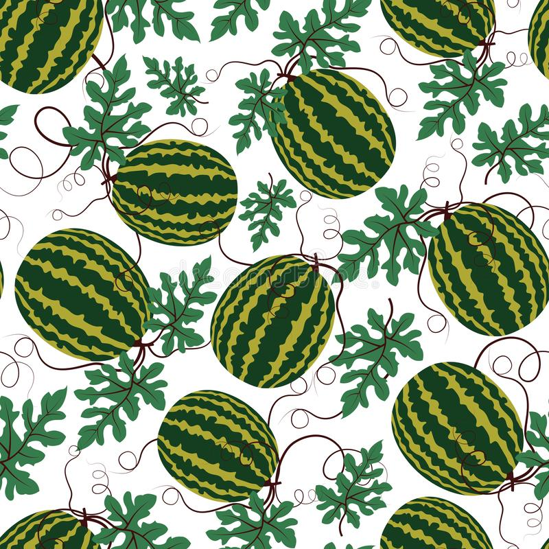 Vector watermelon pattern on white background. Summer fruit. Seamless repeat vector pattern of of green watermelon on a white background. Juicy watermelon summer stock image