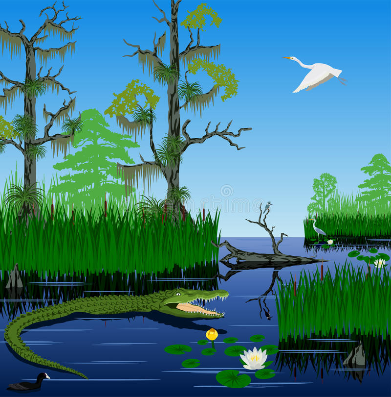 Vector wetland Pantanal Everglades landscape stock illustration