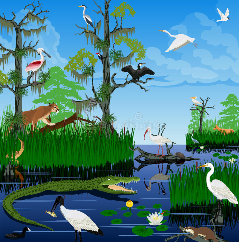 Free Vector Wetland Pantanal Everglades Landscape With Animals Stock Images - 83228714