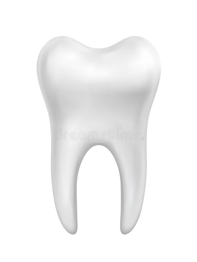 Vector white beautiful shiny tooth illustration isolated on white background royalty free illustration