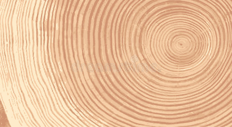 Vector wood texture of wavy ring pattern from a slice of tree. Grayscale wooden stump isolated on white. vector illustration