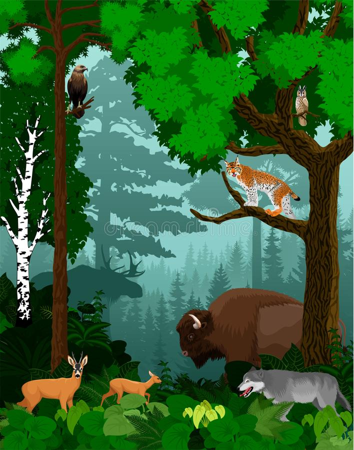 Vector woodland green forest trees backlit with bison, wolf, lynx, owl, moose and deers vector illustration