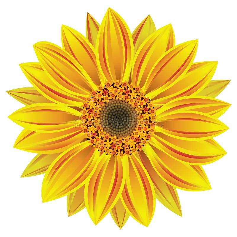 vector zonnebloem stock illustratie