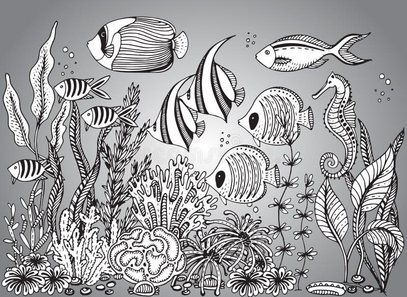 Vector zwart-wit hand getrokken illustratie met zeeschelp royalty-vrije illustratie