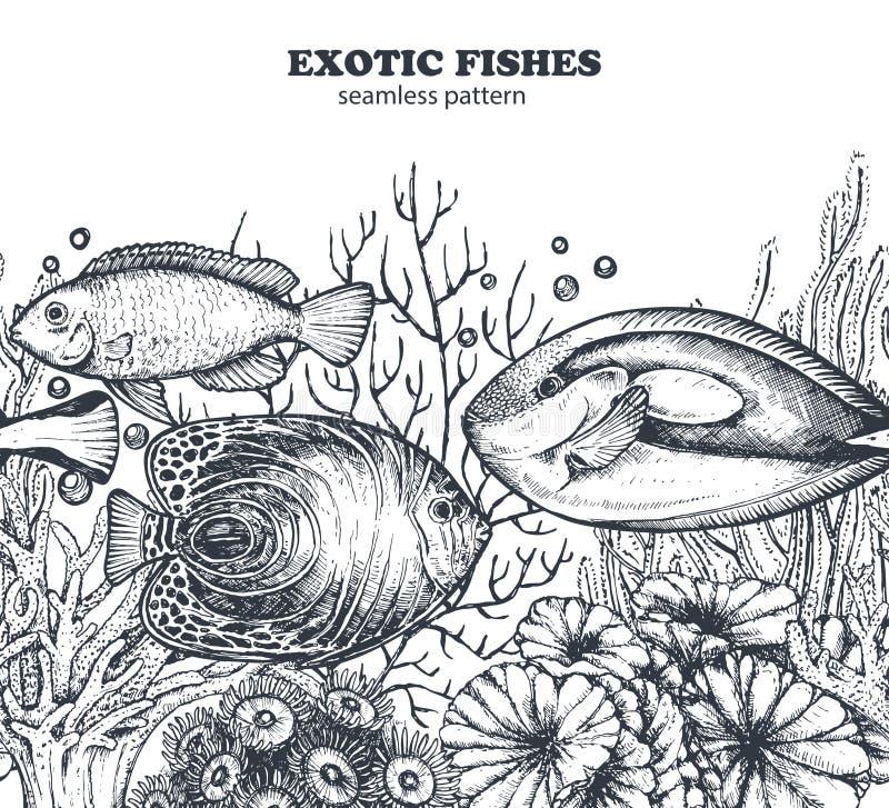 Vector zwart-wit naadloos overzees patroon met tropische vissen, algen, koralen royalty-vrije illustratie