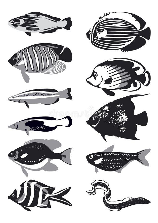 Vector zwart-witte vissen, vector illustratie