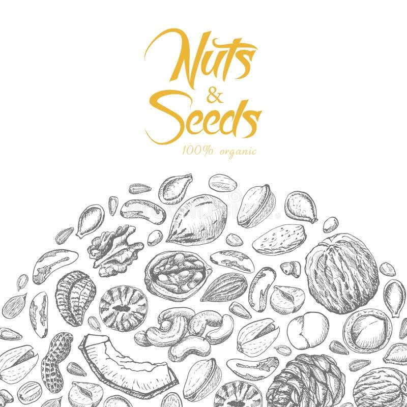 Vectorachtergrond met noten en zaden vector illustratie