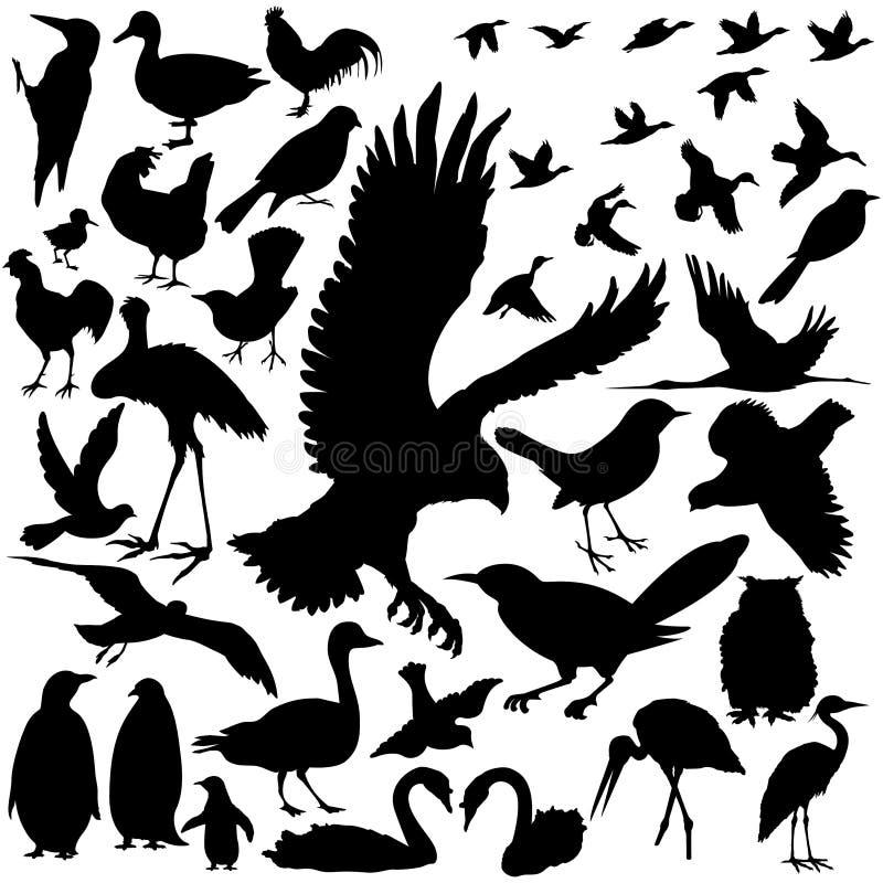 vectoral鸟详细的剪影 向量例证
