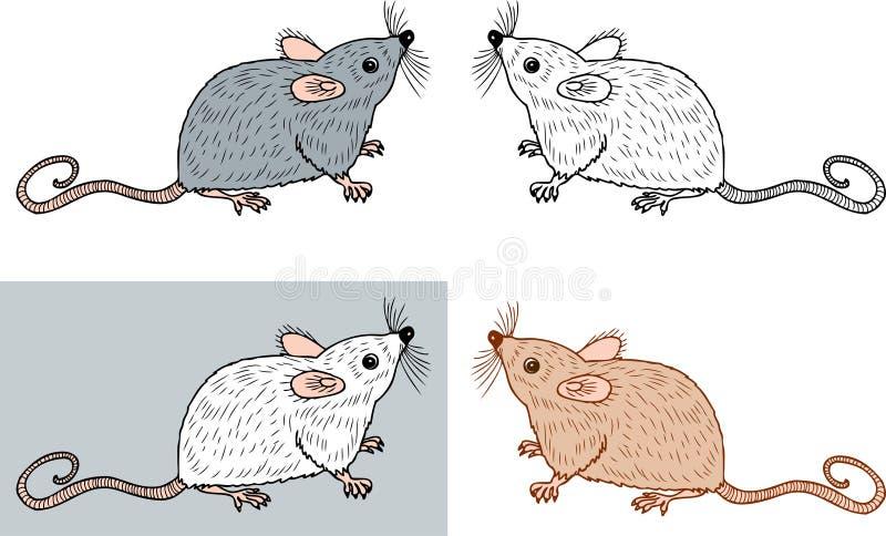 Vectorbeeld van de kleine ratten royalty-vrije illustratie