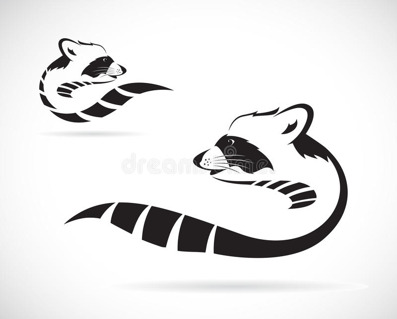 Vectorbeeld van een wasbeer royalty-vrije illustratie