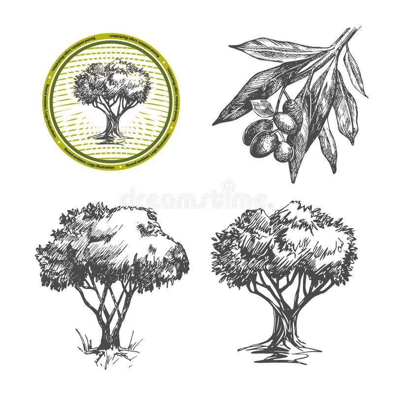 Vectorbeelden van olijven en olijfbomen stock illustratie
