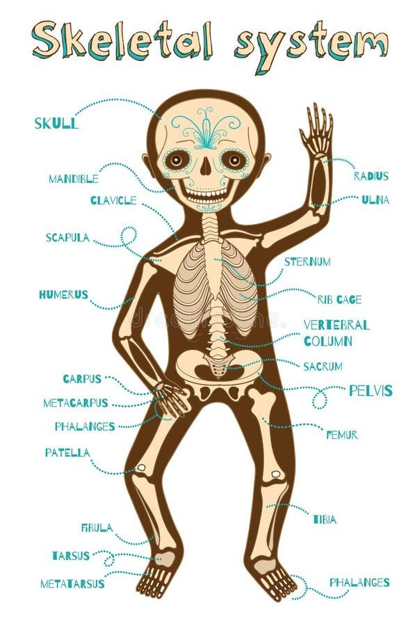 Vectorbeeldverhaalillustratie van menselijk skeletachtig systeem voor jonge geitjes stock illustratie