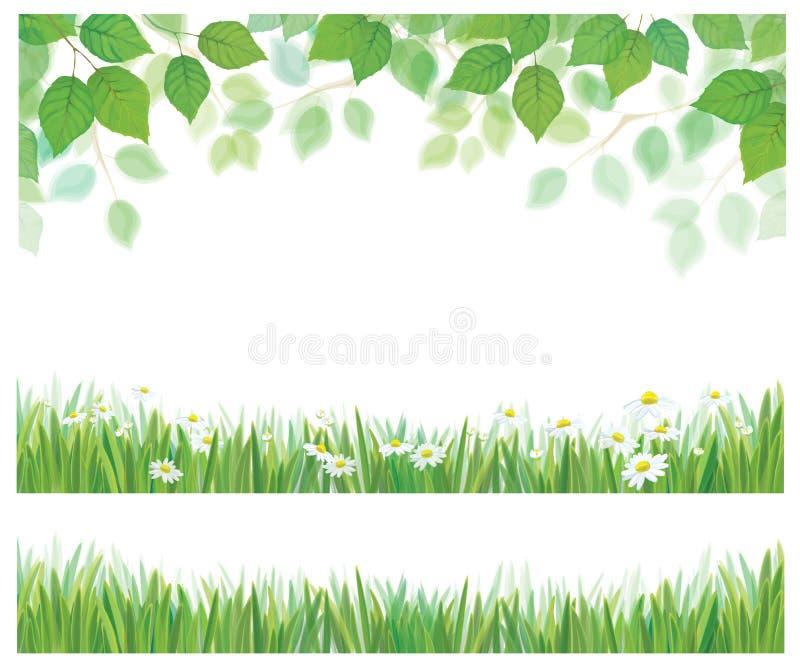 Vectorbladeren, gras en madeliefjegrenzen