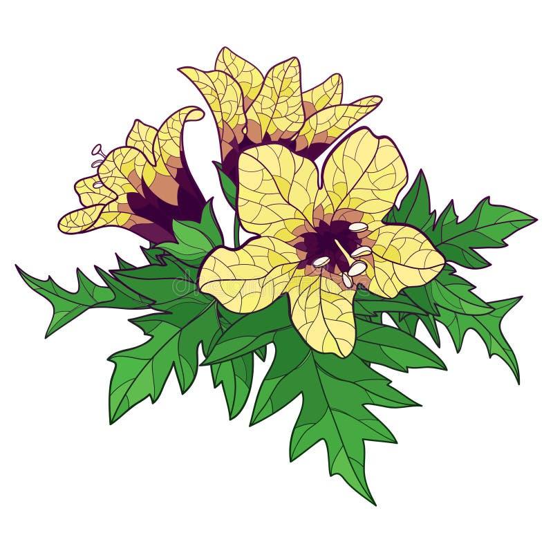 Vectorbos met een overzicht van toxische Hyoscyamus niger of Henbane of stinkende nachtschaduw gele bloem en geïsoleerd ornate gr stock illustratie