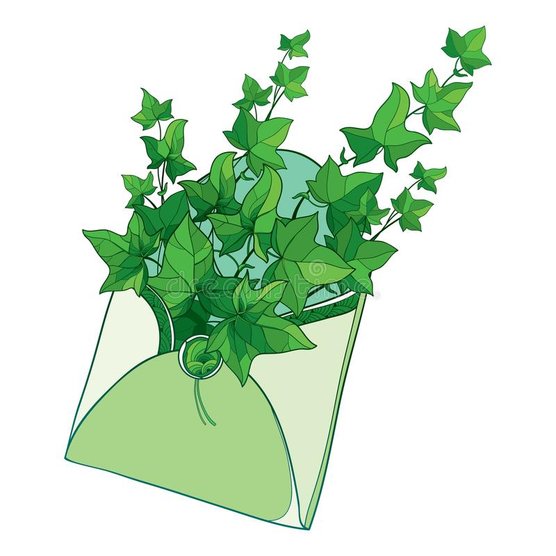 Vectorbos van van overzichtsklimop of Hedera wijnstokken in open ambachtenvelop Overladen bladeren van Klimop in groene pastelkle royalty-vrije illustratie