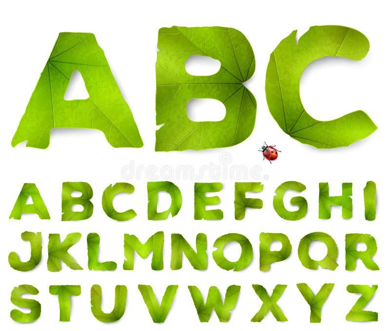 Vectordiealfabetbrieven van groene bladeren worden gemaakt vector illustratie