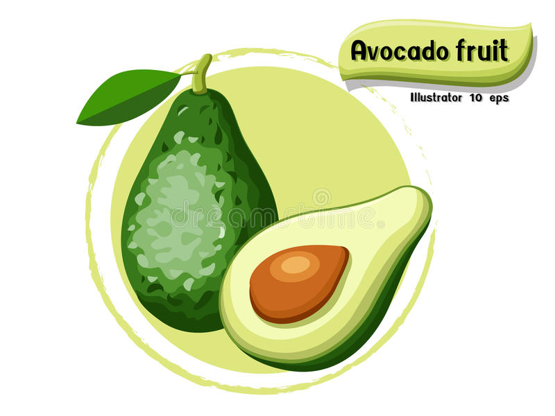VectordieAvocadofruit op kleurenachtergrond wordt geïsoleerd, illustrator 10 eps royalty-vrije illustratie