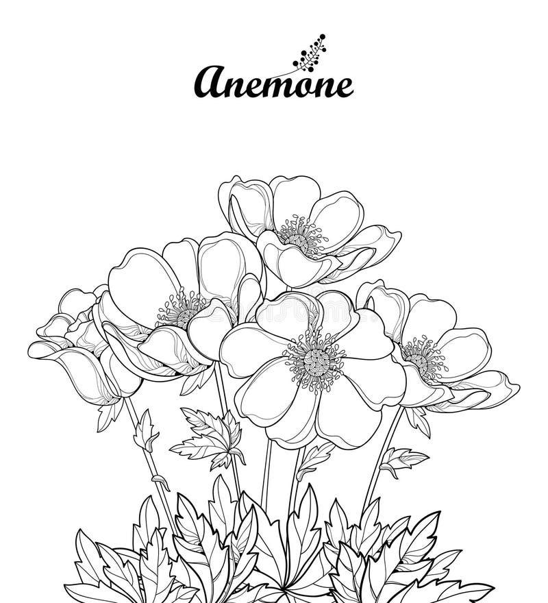 Vectordieboeket met de bloem of Windflower van de overzichtsanemoon, knop en bladeren in zwarte op witte achtergrond wordt geïsol royalty-vrije illustratie