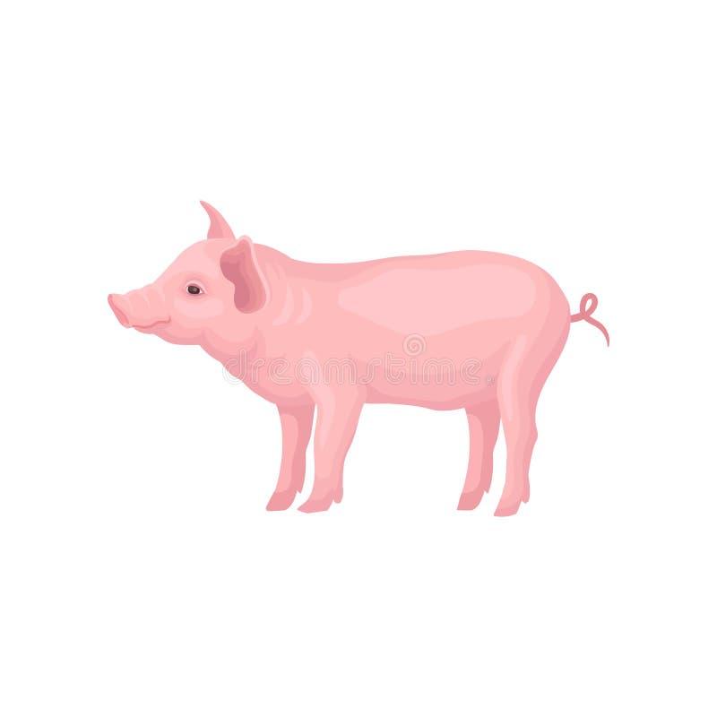 Vectordiepictogram van het vastlopen van varken op witte achtergrond wordt geïsoleerd Landbouwbedrijfdier met hoeven, roze huid,  royalty-vrije illustratie