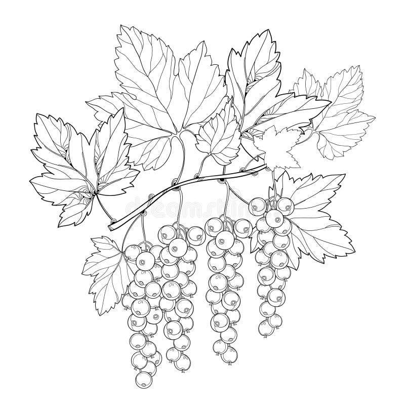 Vectordietak met de bes van de overzichtsrode aalbes en bladeren in zwarte op witte achtergrond wordt geïsoleerd Bloemenelementen stock illustratie