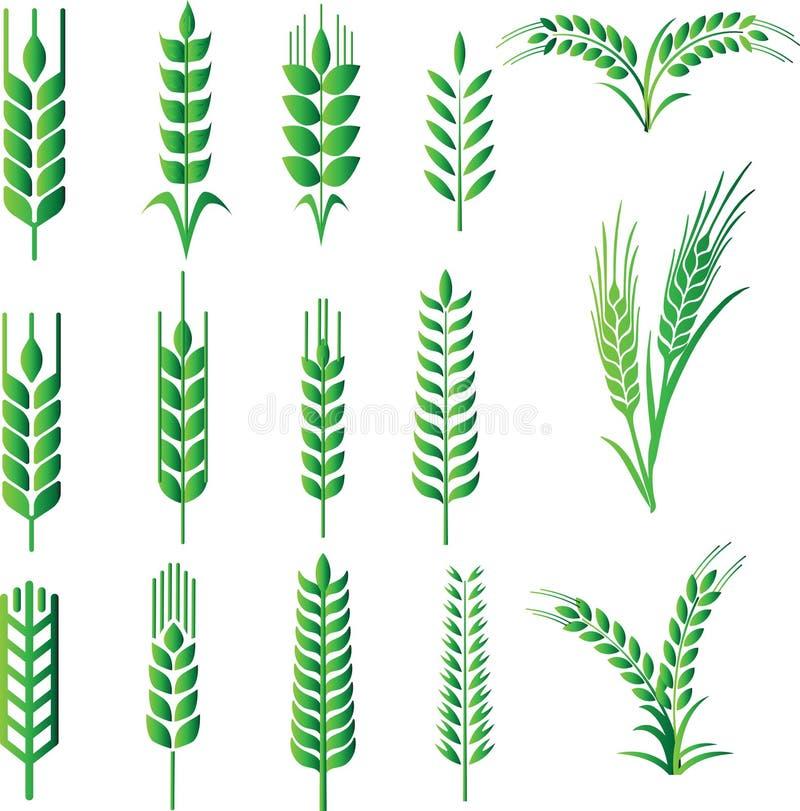 Vectores de la avena de la cebada libre illustration