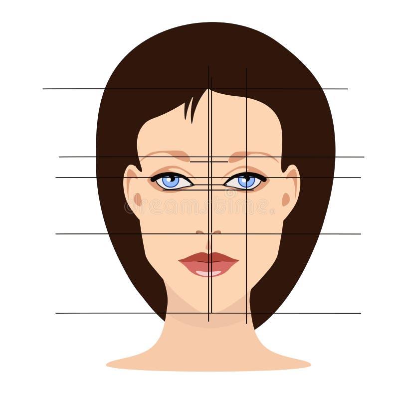 Vectorgezicht met lijnen die gezichtsaandelen voor de kosmetiek tonen vector illustratie