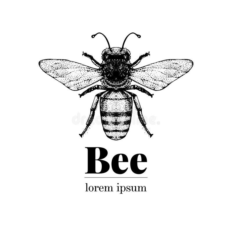 Vectorhand getrokken bijenillustratie Het uitstekende malplaatje van het stijlembleem Intelligente insectillustratie vector illustratie