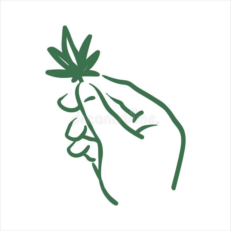 Vectorhand getrokken cannabis in hand illustratie op witte achtergrond vector illustratie